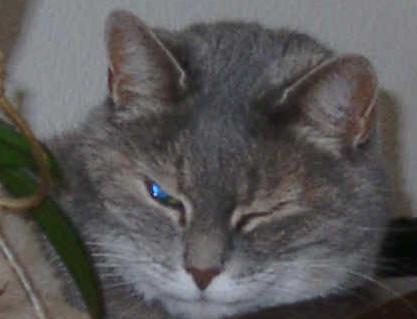 Mausi ging im September 2010 über die Regenbogenbrücke. Sie wurde knapp 23 Jahre alt und war in ihrem Leben 4x beim Tierarzt. Meine kleine Grotto-Maus war ein absolut toller Kumpel für uns alle.